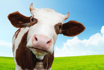 2022 Cow Calendar.Cow Appreciation Day 2022 Jul 08 2022