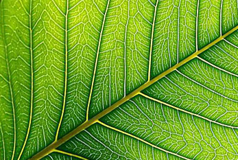 The leaf of a plant.