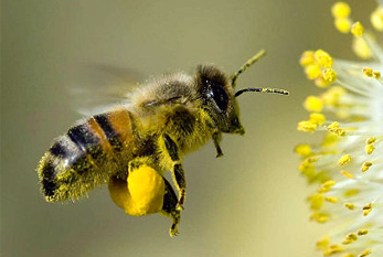 National Honey Bee Day 2016 is August 20