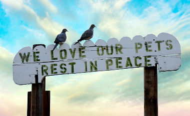 Mourning doves perched on a sign in a pet cemetery
