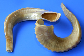 Two shofars, symbol of the Rosh Hashanah holiday.