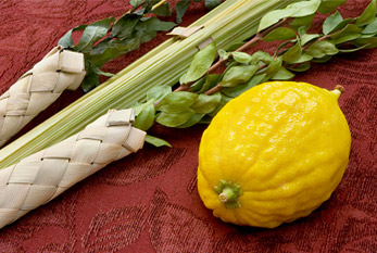Lulav and etrog used on Sukkot.