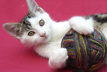 A cat plays with a ball of wool.