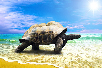 Turtle on a beach.