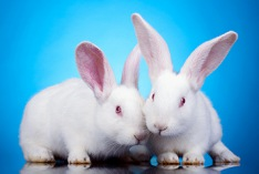 International Rabbit Day 2018