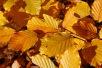 Autumnal equinox 2020