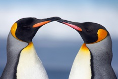 Penguin Awareness Day 2021