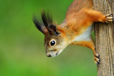 Squirrel Appreciation Day 2021