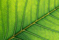 International Plant Appreciation Day 2020