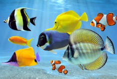 International Day for Biological Diversity 2023