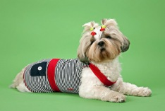 National Dress Up Your Pet Day 2021