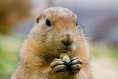 Groundhog Day 2015