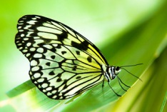 Learn about Butterflies Day 2023