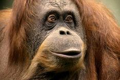 Monkey Day 2021