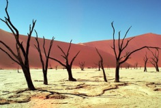 World Day to Combat Desertification and Drought 2018
