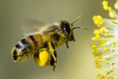 National Honey Bee Day 2019