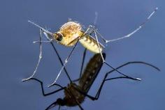 World Mosquito Day 2019